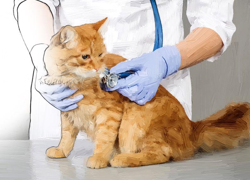 Feline Internal Medicine II