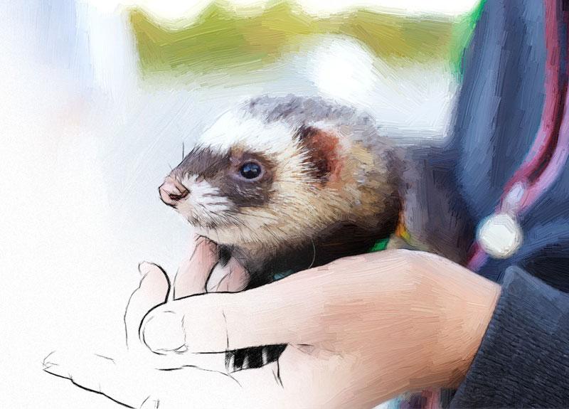 Exotic Pets – Small Mammal Dentistry